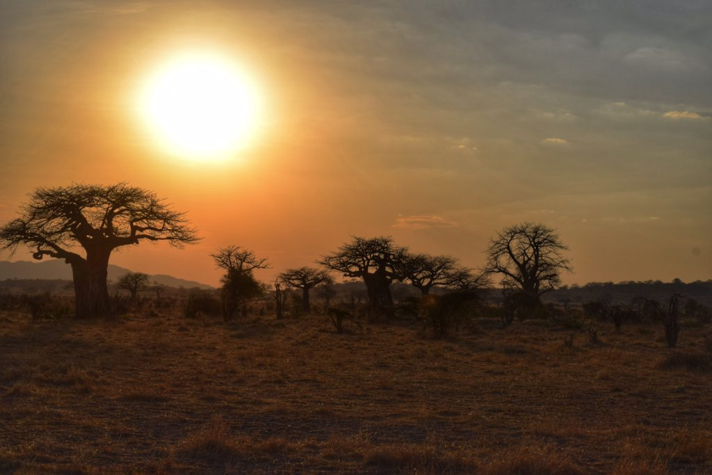 Sunset in Ruaha National Park, Tanzania