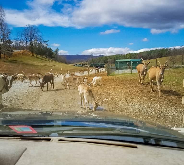 Virginia Safari Park: A Wild Adventure in the Heart of Virginia