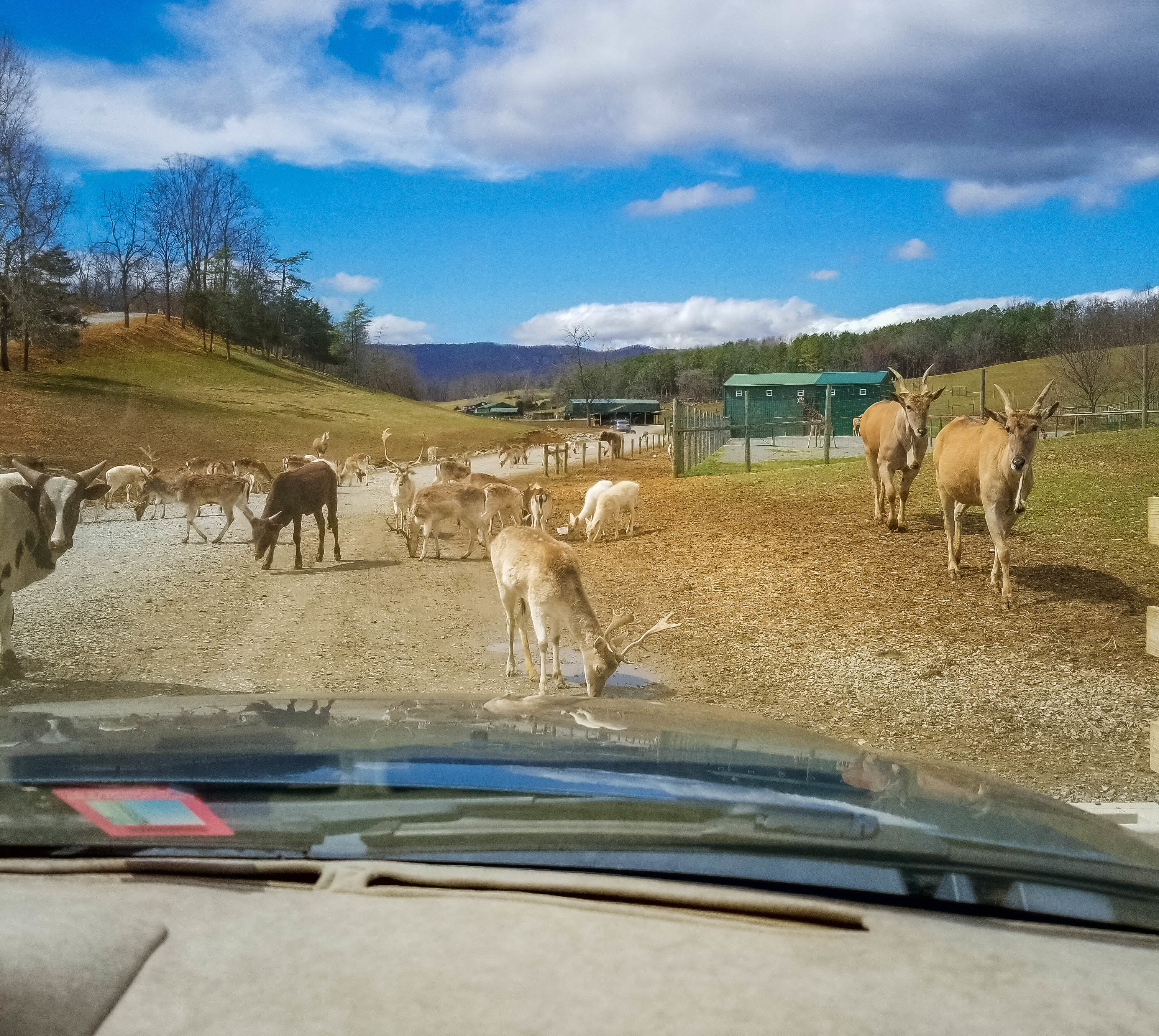 Virginia Safari Park: A Wild Adventure in the Heart of Virginia