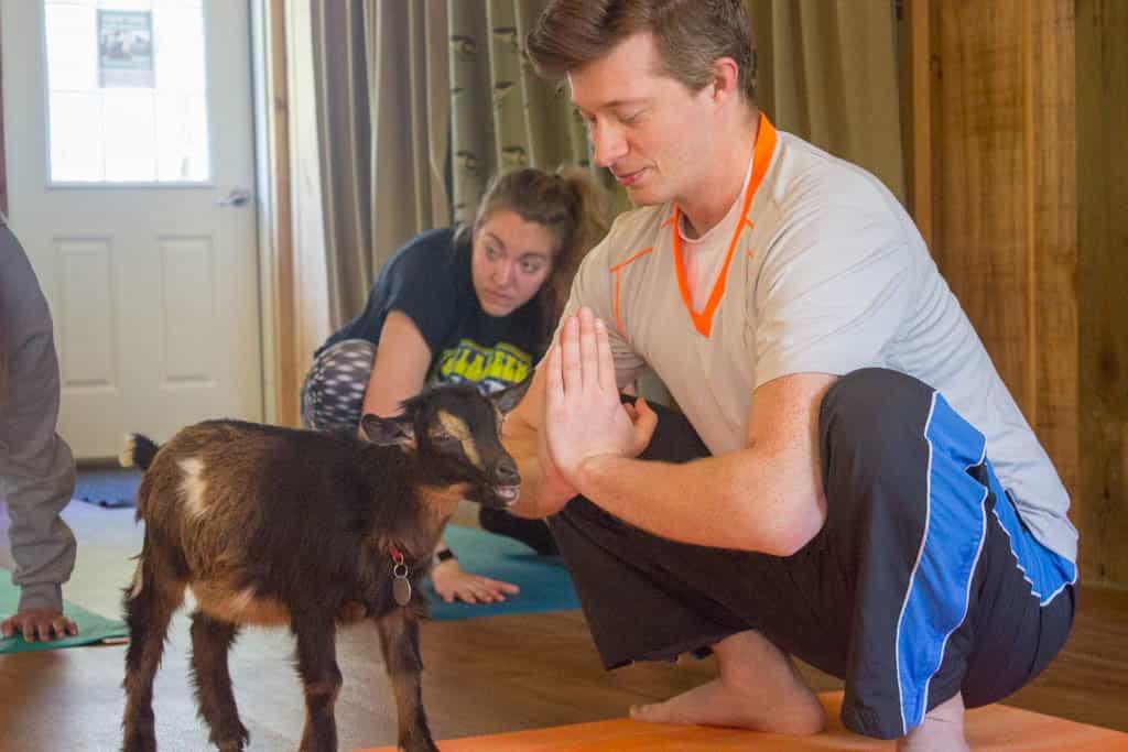 Goat Yoga Autumn Ridge Lexington Virginia