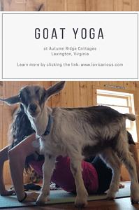 Goat Yoga pinterest