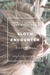 Pinterest sloth