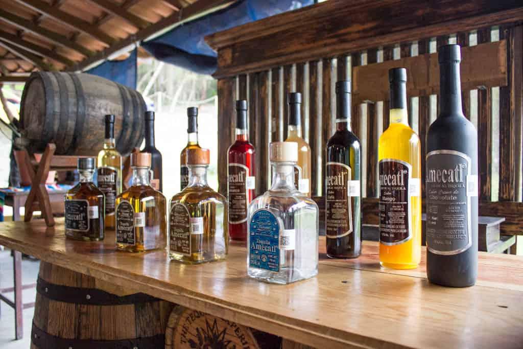 Tequila Tasting Rancho Mi Chaparrita Sayulita Mexico