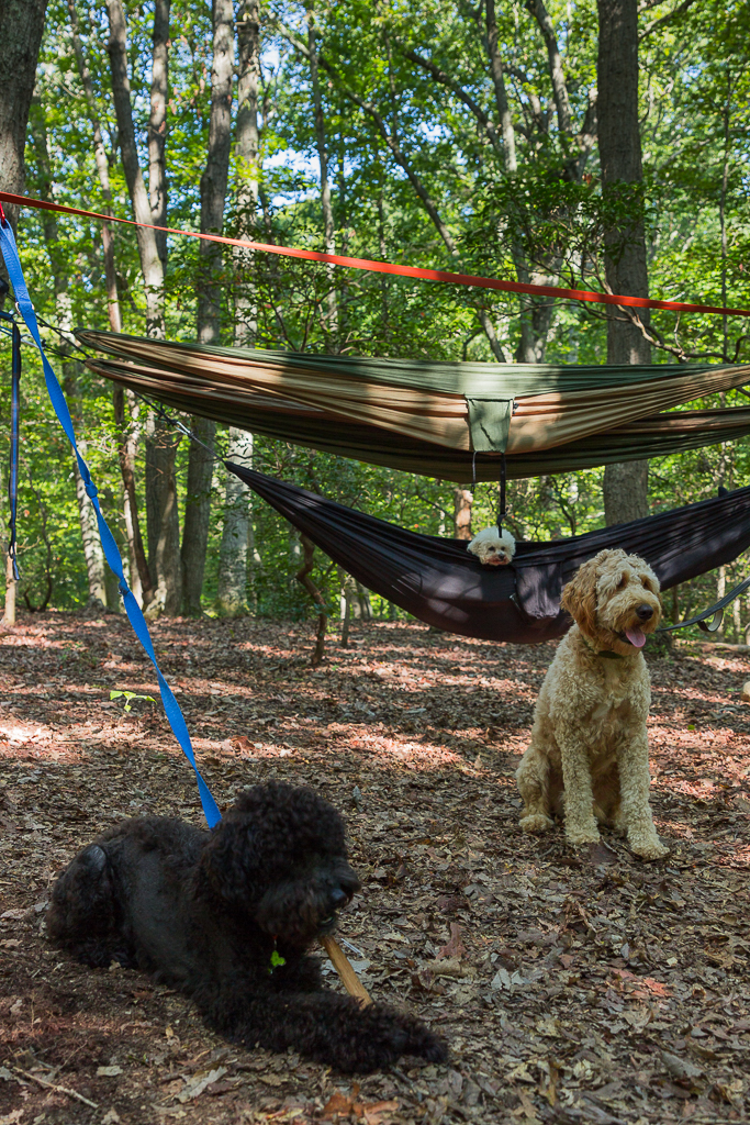 Dog Camping northern virginia