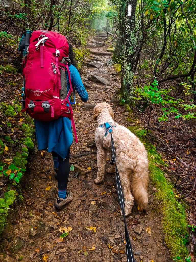 Backpacking Three Ridges Loop, Virginia