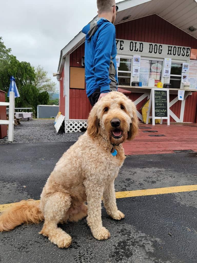 Ye Olde Dog Airydale Pennsylvania